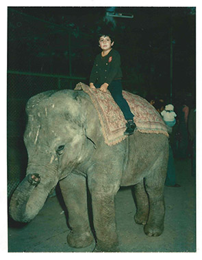 Hooman on an elephant